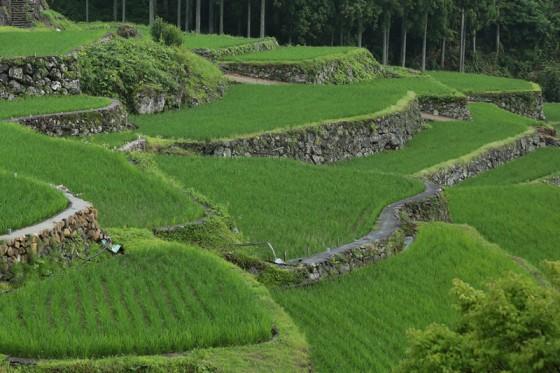 現在の棚田にも登呂遺跡と共通する利水方法が伺える。