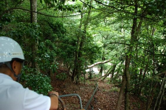 急斜面に広がる原生林を進むモノレール。