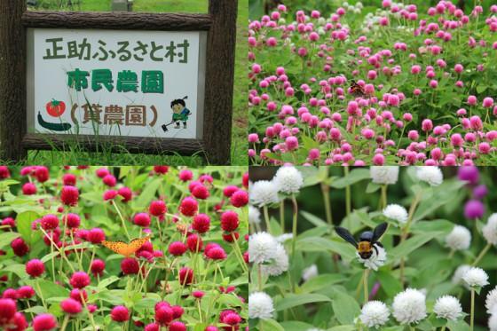 有機・無農薬野菜を作る市民農園の周りは花盛り。