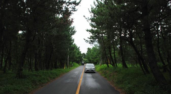 鬱蒼としたさつき松原の中央付近を走るプリウスPHV