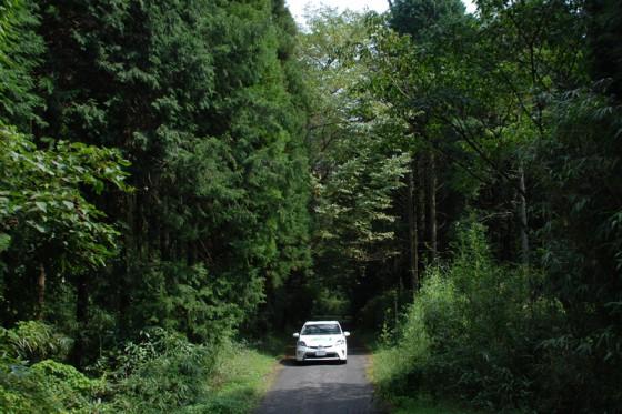 鬱蒼とした森を抜けると急勾配の坂道に差し掛かる。