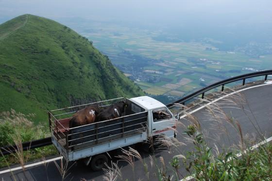 周辺の牧場から牛を運んだトラックが天空の道を登ってきた。