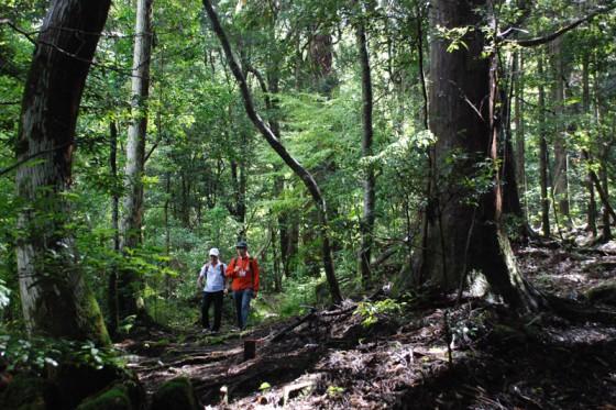 森へ一歩踏み入れると、参道に並ぶ大杉と原始の森が渾然一体となって包み込んでくれる。