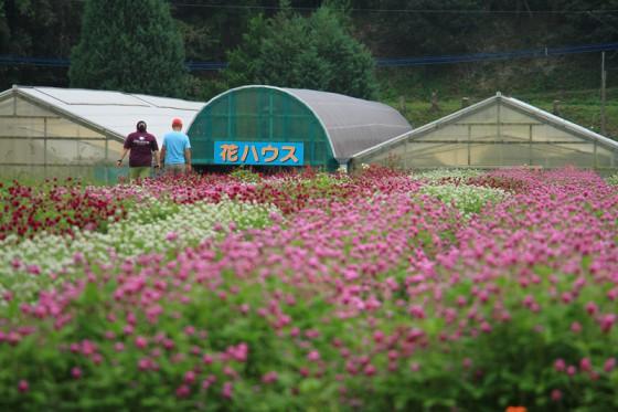 巨大キノコ「ニオウシメジ」を栽培している農園を訪ねた。