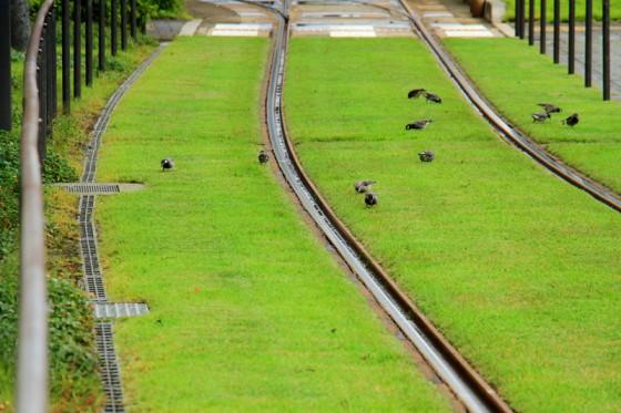 鳥が種や虫を啄んでいる。ブリーンベルトは小動物たちにも憩いの場を提供しているようだ。