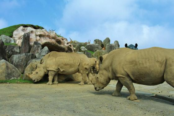 間近で見る大型動物は迫力満点だ。