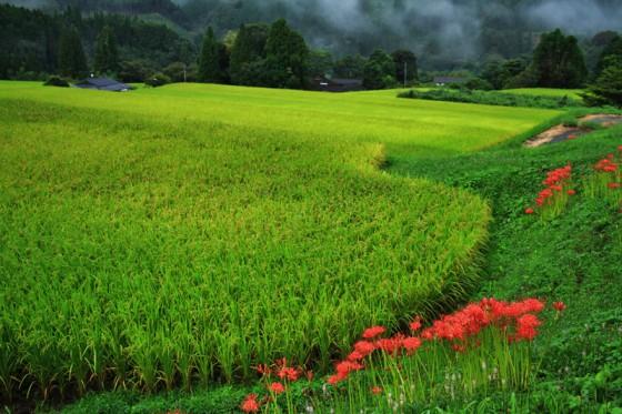 宿の周囲は米好きが指名する程旨い「球磨川源流米」の田んぼが広がる。