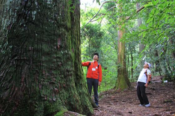 樹齢1,000年を越えると言われる幹周8メートルの平安杉。