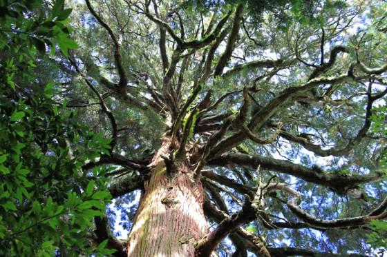 枝の一本づつが意識をもった生き物のようにうねりながら四方八方に広がる。