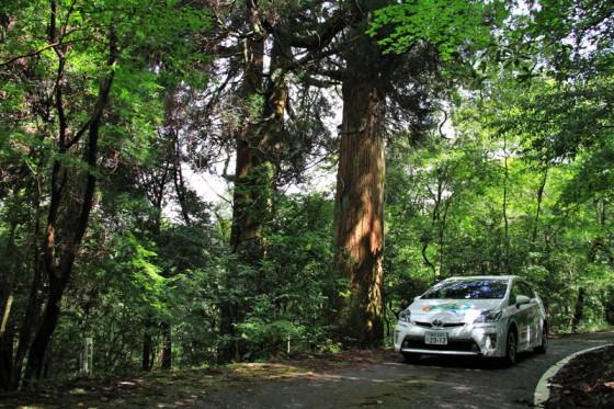 市房山神宮里宮神社までの道路脇にも見事な古木があった。
