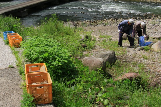 河原で畑の土留め用の石を集める地元の農家。ここには川と密接に関わる暮らしがある。