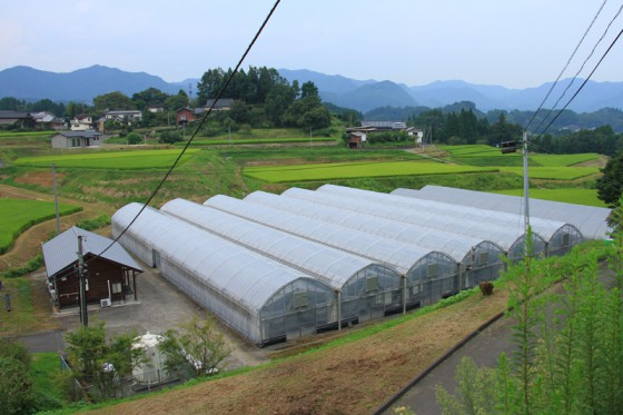 イチゴ栽培のビニールハウスの暖房などに使われている。